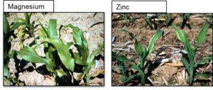 Tips for diagnosing nutrient deficiencies – Montys Plant Food
