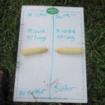Corn with and without Monty's Sulfur 15.