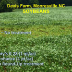 These Soybeans were showing signs of potash deficiency. Mr. Davis added one quart of K-28 and one pint of Microhance to his Round-up treatment. As you can see, it turned these soybeans around.