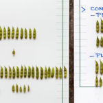 Beans with Agrihance-V (Left) vs control (right). Click to view the comparison.