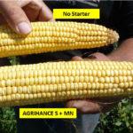 Side-by-side of corn. No starter vs Agrihance-S seed starter